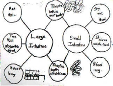 Thinking Maps, Inc. | Thinking Maps Student Examples on